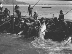 Foto storica mattanza tonno a Milazzo